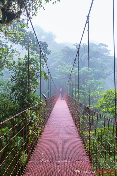 Man on a suspended bridge, Monteverde Cloud Forest, Costa Rica