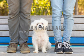 couple standing with white dog