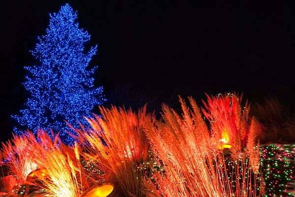 Festival of Lights, Denver Botanical Gardens