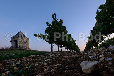 VIGNOBLE CAHORS, LOT//VINEYARDS CAHORS