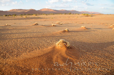Desert sand formations and plants