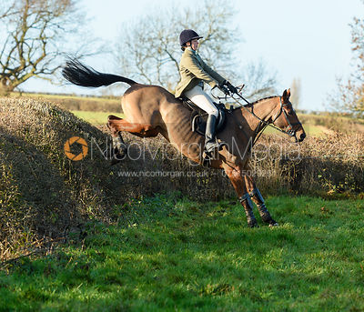 Vittoria Panizzon Jumping a big drop hedge.The Quorn at Barrowcliffe