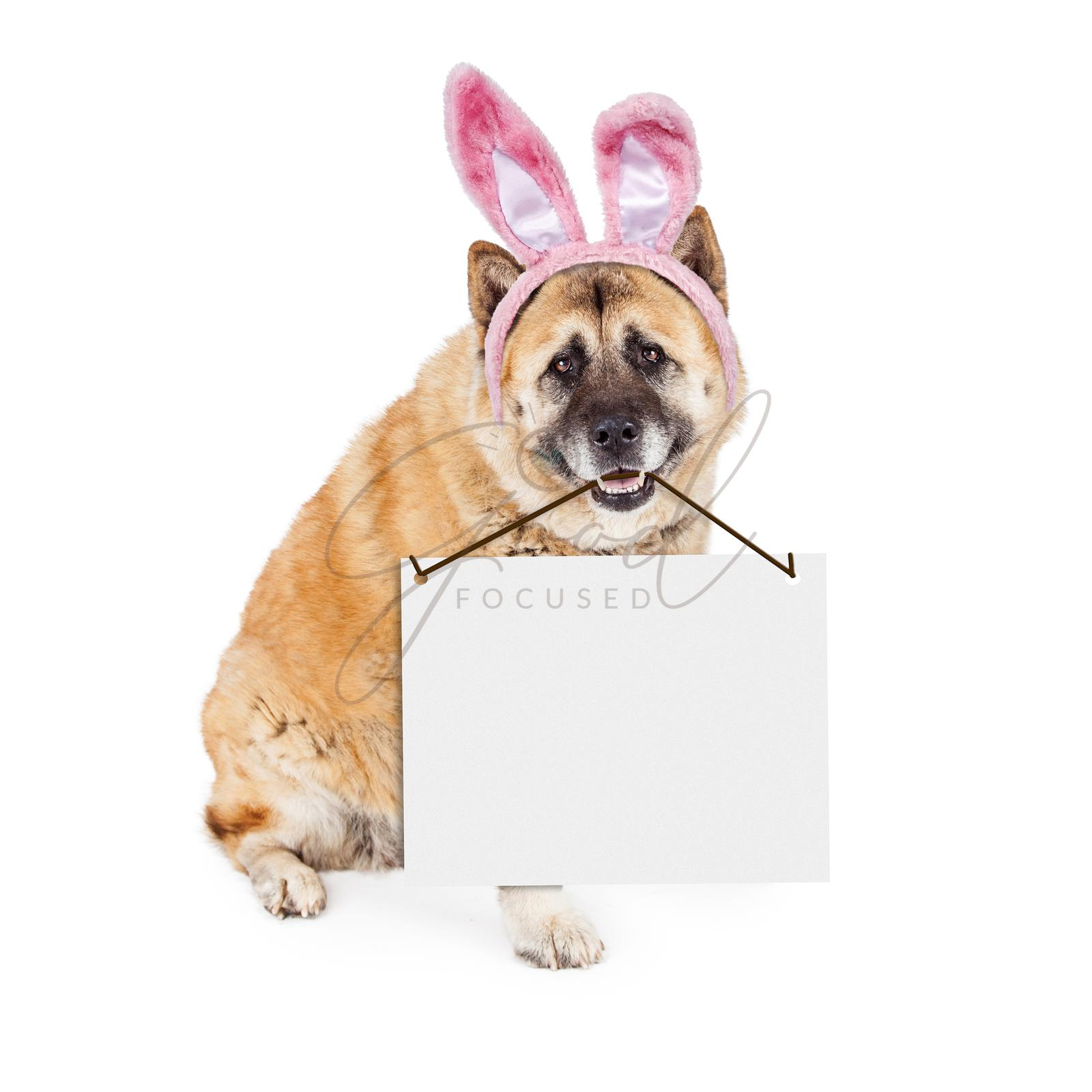 Easter Bunny Akita Dog Carrying Blank Sign