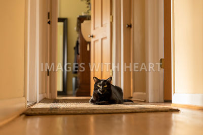 A black cat sitting in a patch of sunlight in a home