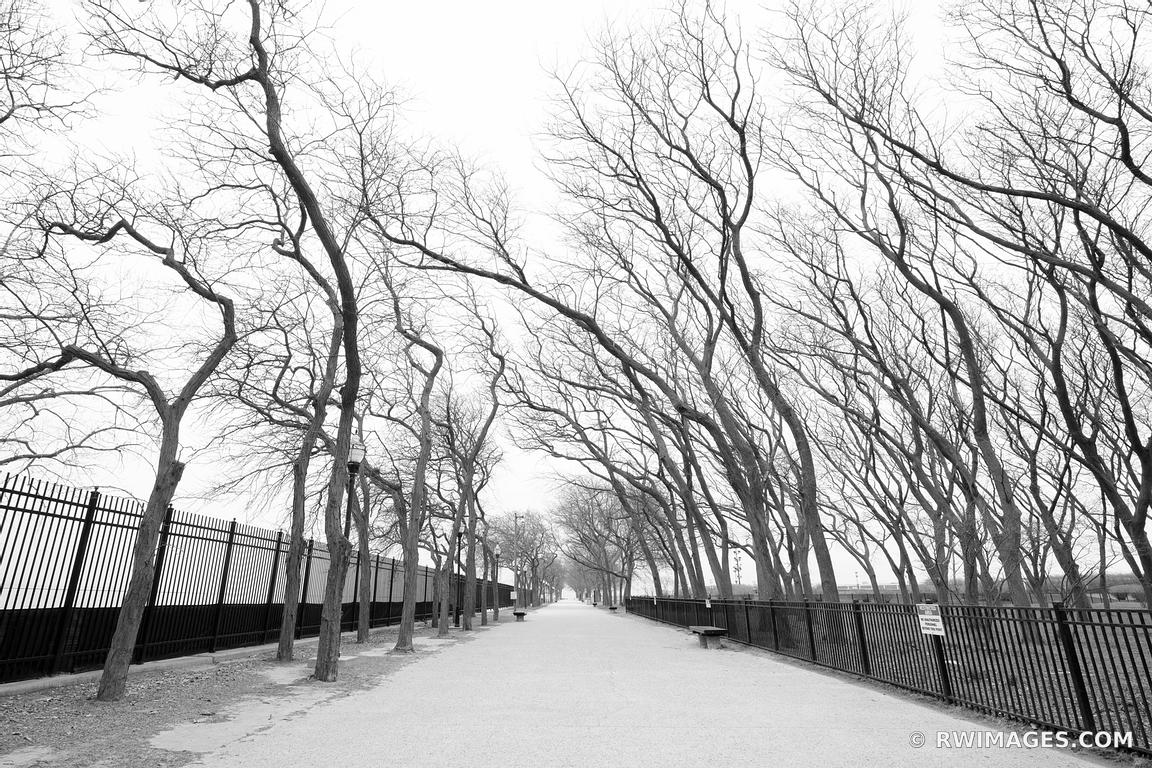 MILTON LEE OLIVE PARK WINTER TREES CHICAGO ILLINOIS BLACK AND WHITE