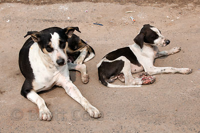 A stray dog mother and puppy on the street in Sovabazar, Kolkata, India.