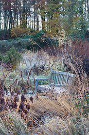 Mixed grasses and seedheads surrounding bench