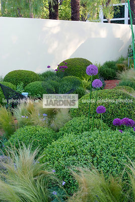 Ball shaped, Buxus, Contemporary garden, Digital, Sphere shaped, Topiary, Common Box