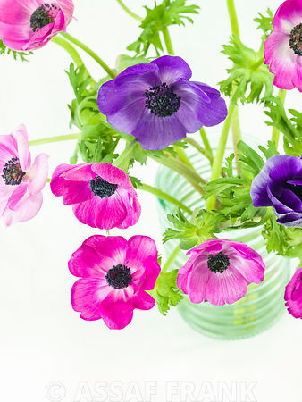 Bunch of Anemone flowers in glass jar
