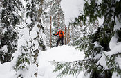 Snowshoer in forest