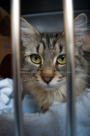 A rescue cat looks out of the bars of its cage at the animal shelter