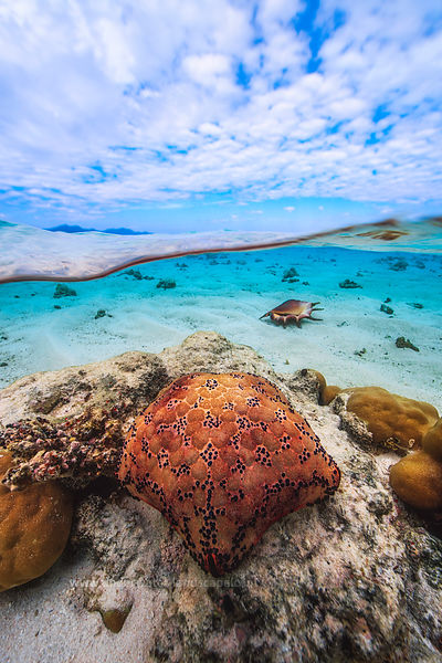 Shells and starfish in Mayotte lagoon