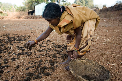 A tribal woman fertilises her field