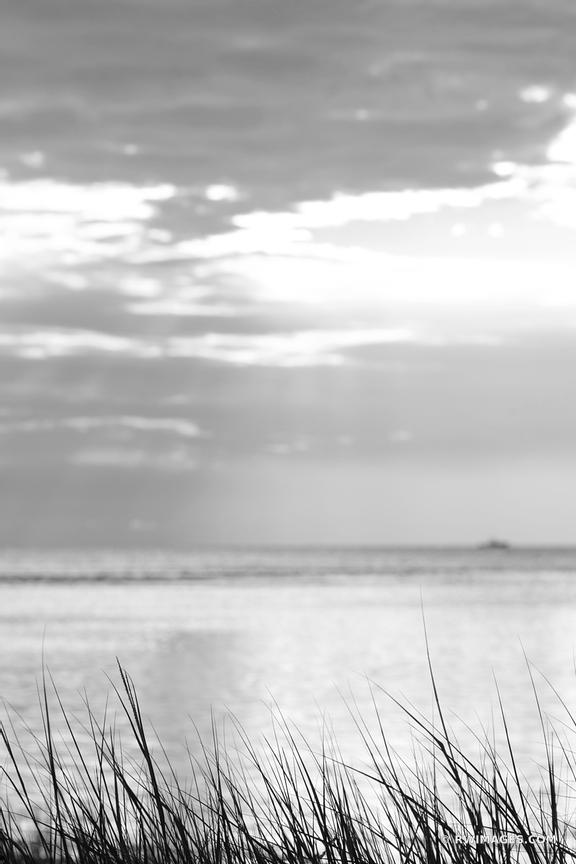 BEACH GRASSES ROCK HARBOR ORLEANS CAPE COD BLACK AND WHITE VERTICAL