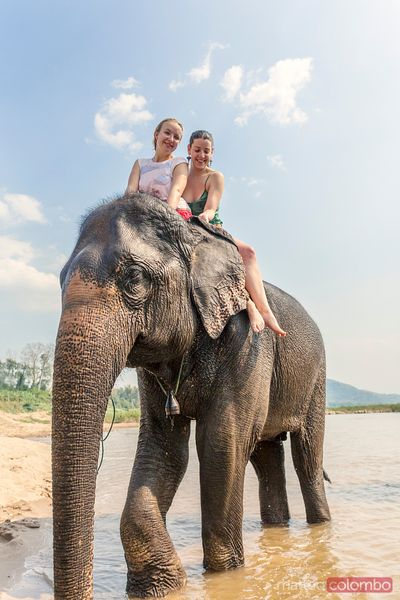 Two women riding an elephant in the Mekong, Laos