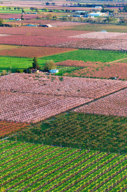 Peach Orchards in Bloom from the Air #15