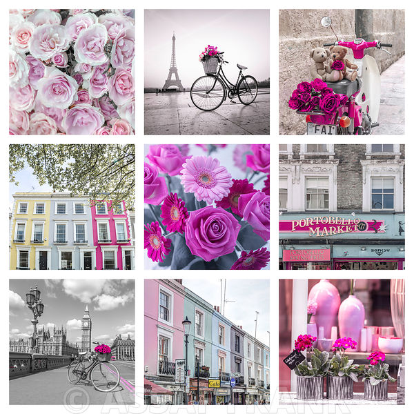 Collage of different flowers, buildings and places