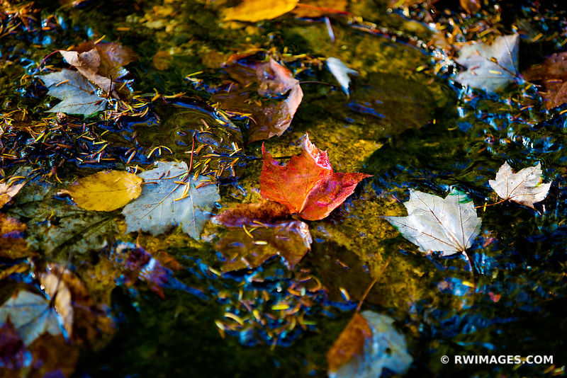 STREAM AUTUMN LEAVES WHITE MOUNTAINS NEW HAMPSHIRE FALL COLORS