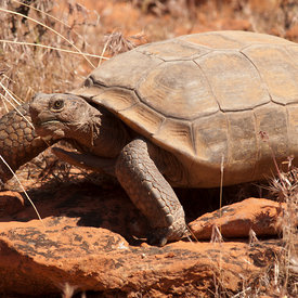 Tortoises wildlife photos