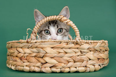 Kitten peeking out of basket