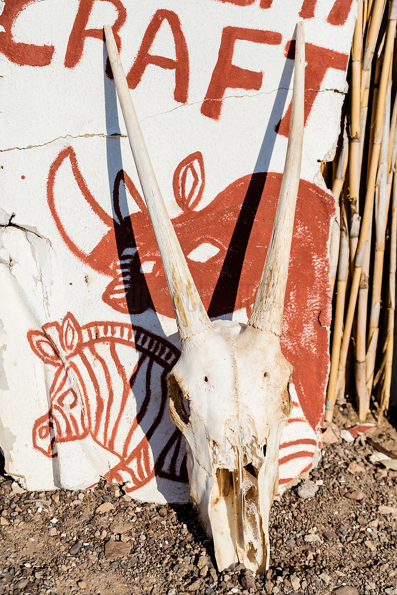 Gemsbok Skull in Front of Sign
