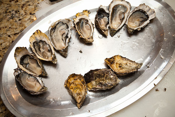 A silver platter of freshly shucked oysters