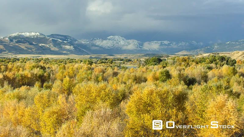 Dramatic golden Aspen and Cottonwood trees line the banks of the Yellowstone River in autumn, within the Paradise Valley, Mon...