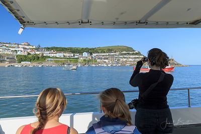 Dolphin watching boat trip, New Quay