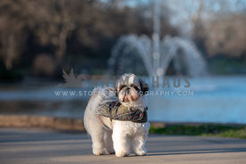 shih tzu wearing a green plaid dog coat
