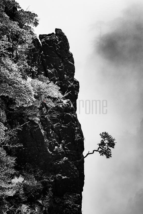 "Solitary Tree at the Huangshan ""Grand Canyon"""