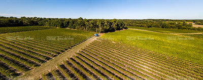 Grape harvesting machine, Aerial view of Wine country harvesting grape with harvester machine, drone view of bordeaux vineyar...