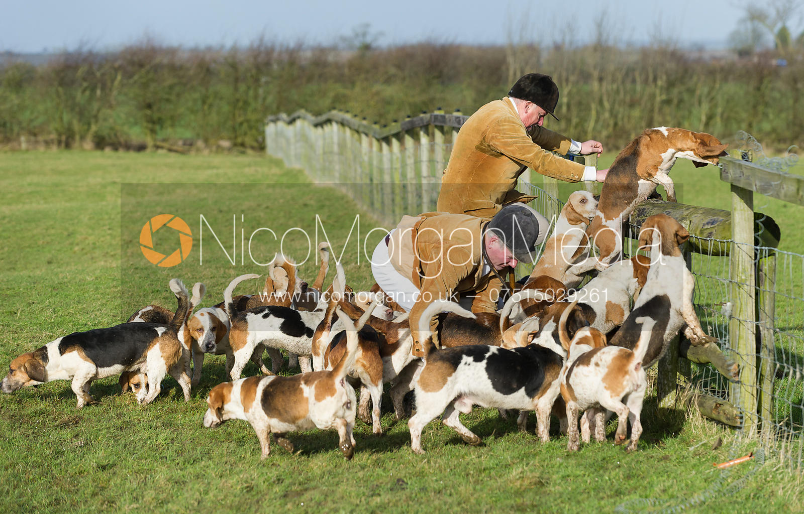 Giving basset hounds  a helping hand over a hunt jump