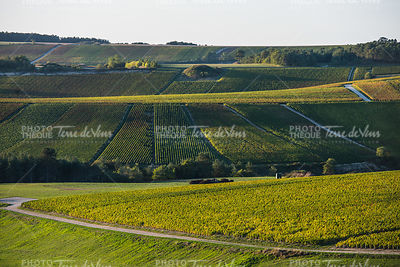 Champagne vineyards in the Cote des Bar Aube