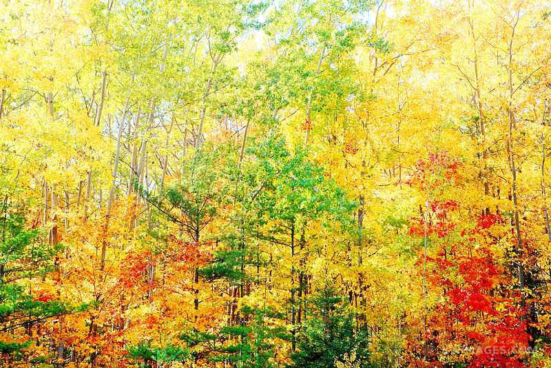 AUTUMN FOREST DOOR COUNTY WISCONSIN FALL COLORS