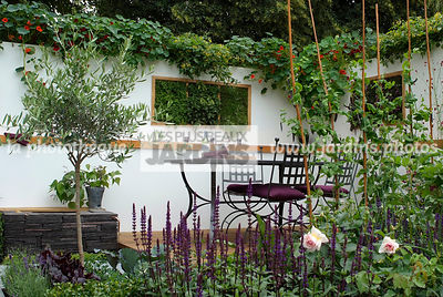 Allotment, Contemporary garden, Garden chair, garden designer, Garden furniture, Garden table, mangetout, Mini potager, Mini Vegetable garden, Olive tree, Small garden, Tropaeolum majus, Urban garden, Vegetable patch, Vegetable plot, Foliage wall, Green wa