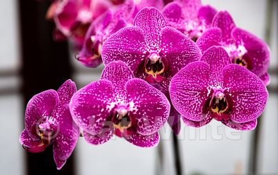 Orchid-9619_October_07_2018_NAT_WHITE