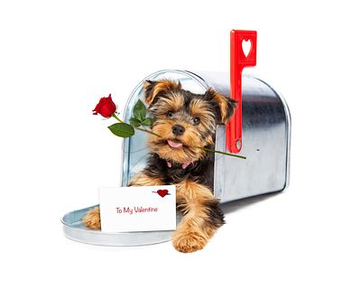 Puppy Delivering Valentine and Rose