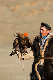 Kazakh eagle hunter with his Golden Eagle Uglii in Altai Mountains western Mongolia
