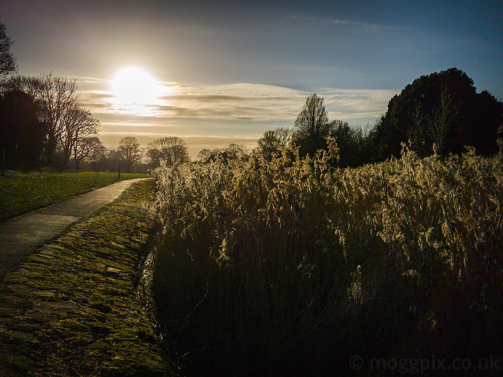 Winter Sun in Princes Park