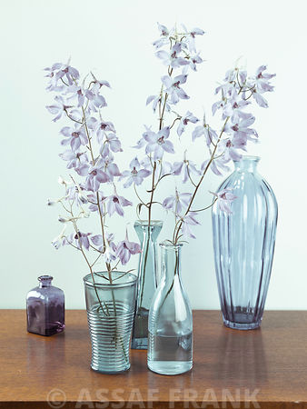 Delphinium flowers in glass bottles