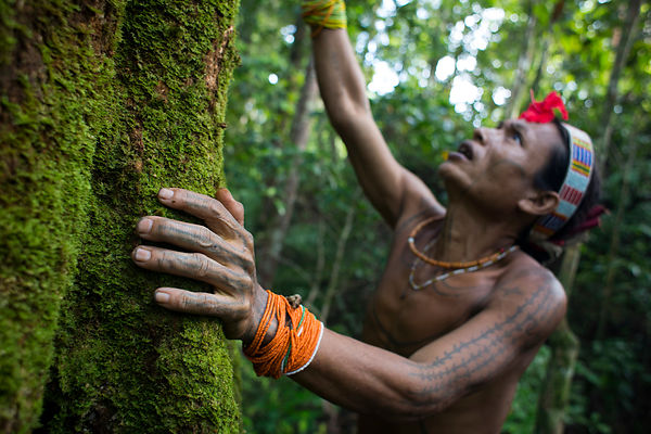 Amantari, 39, shaman, apologizes to a tree belonging to the Hopea family to tell him that he will need his wood to build a ho...