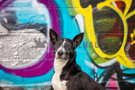 dog posing infront of graffiti