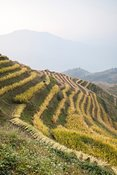 Longsheng rice terraces in autumn, Guilin, China