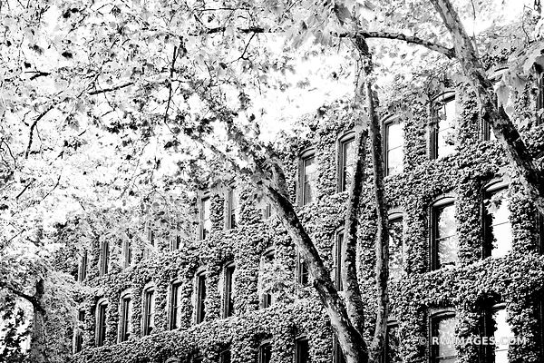 OCCIDENTAL PARK SEATTLE HISTORIC DISTRICT BLACK AND WHITE
