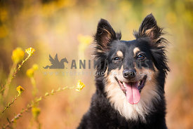 Portrait of a happy mixed breed