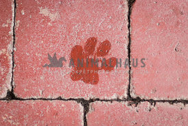 wet paw print on bricks