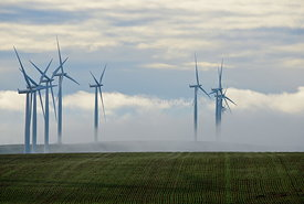 Green wheat and wind towers