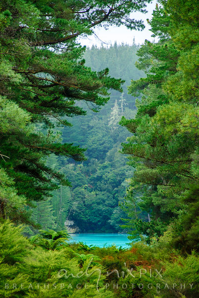 Aqua blue waters of a thermal lake at the foot of a forested hill, viewed through a gap in pine trees