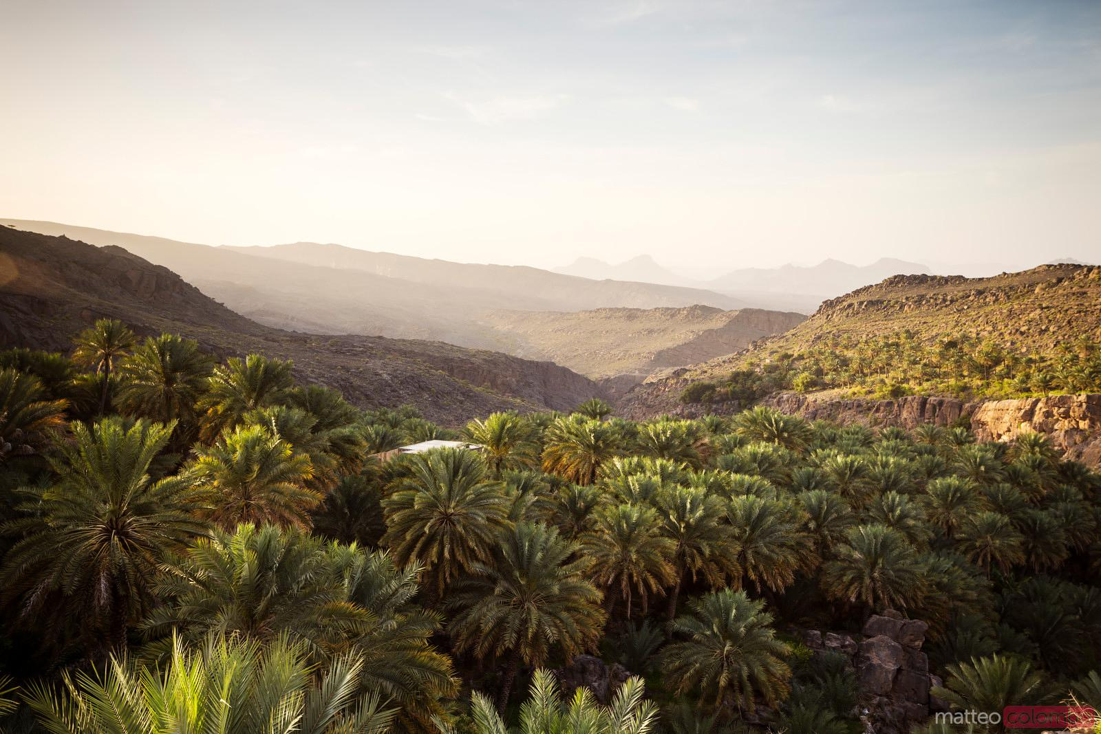 Green valley with palms at sunrise, Oman