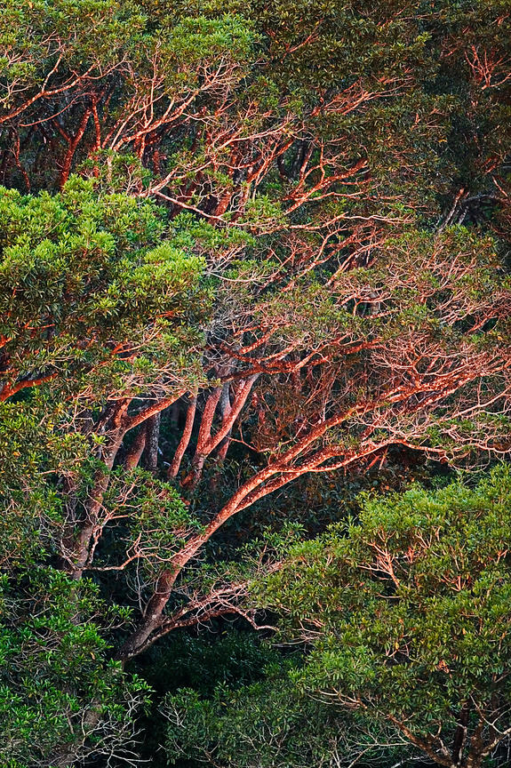 Savanna Scrub Forest at Dusk, Transpantaneira Highway, Pantanal, Mato Grosso, Brazil
